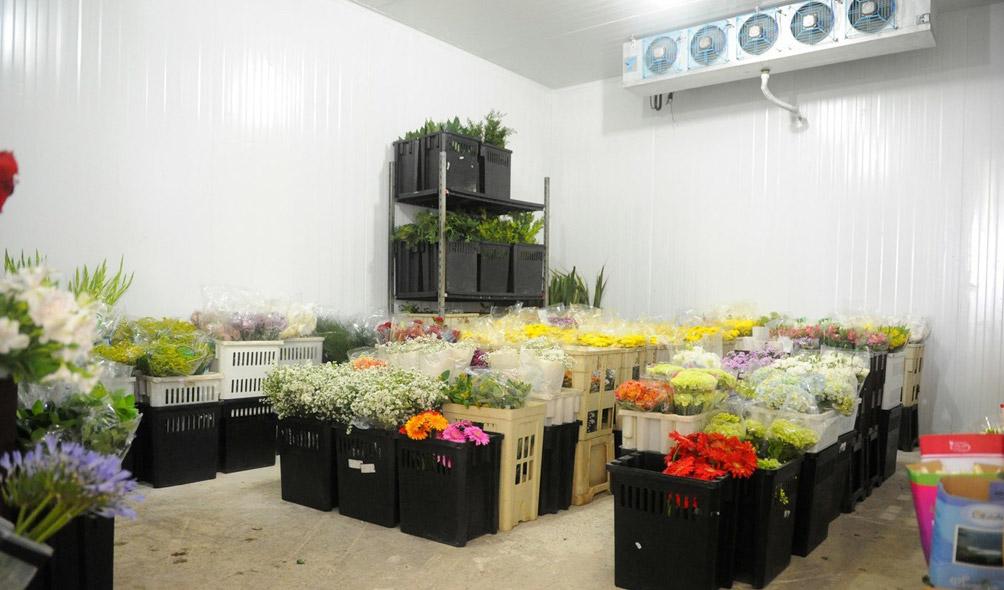 Atacadista para Floriculturas e Decoradores